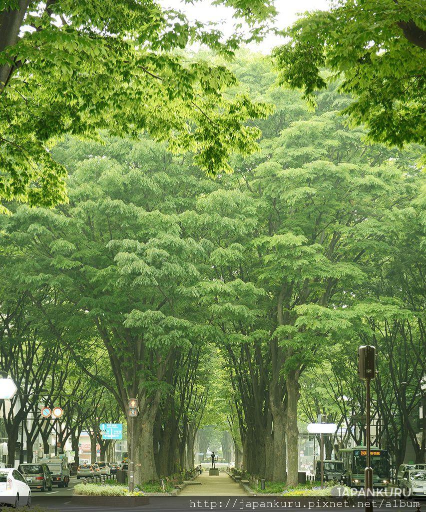 定禅寺通り(定禪寺大道)