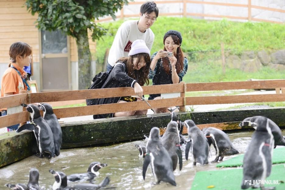 企鵝來吃魚唷