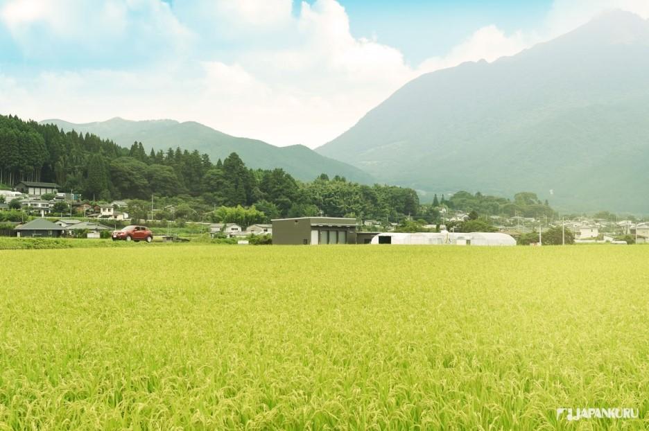 湯布院的田園風景