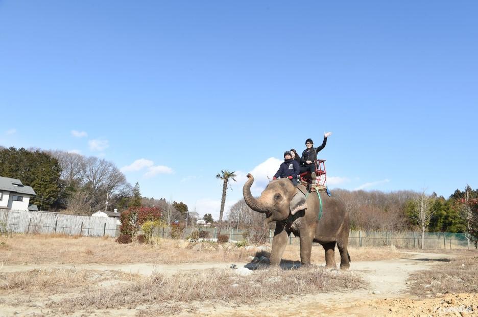 Riding on elephants