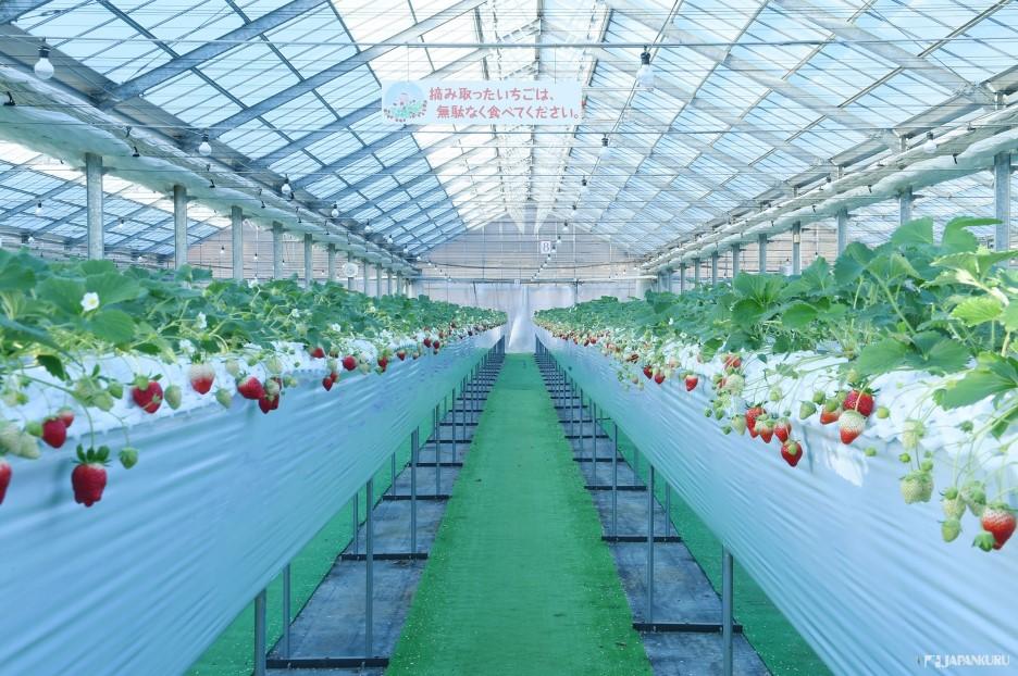 The Sweetness of Fresh Nasu Strawberries