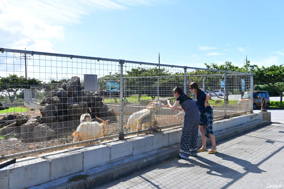 둘. 동물들과의 교감! 작은동물원 병설.