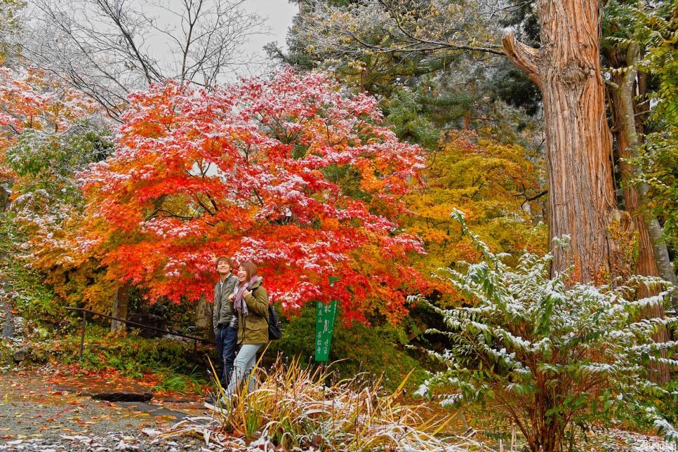 ▲紅葉與白雪的結合真的太夢幻