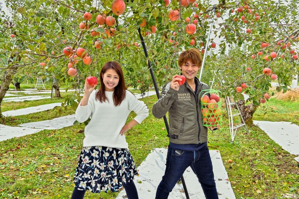 매력 둘. 사과 따기 체험