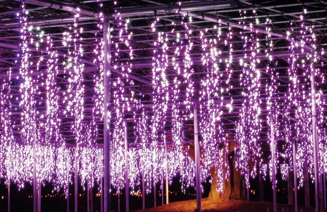 以彩燈重現藤花之美的燈飾 奇蹟的大藤