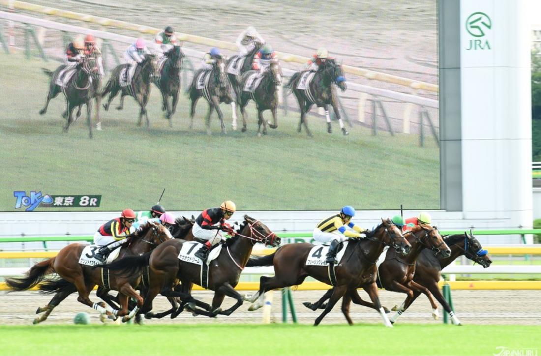 Cuộc đua ngựa lớn nhất Nhật Bản 🐴 tại Trường đua ngựa Nhật Bản ...