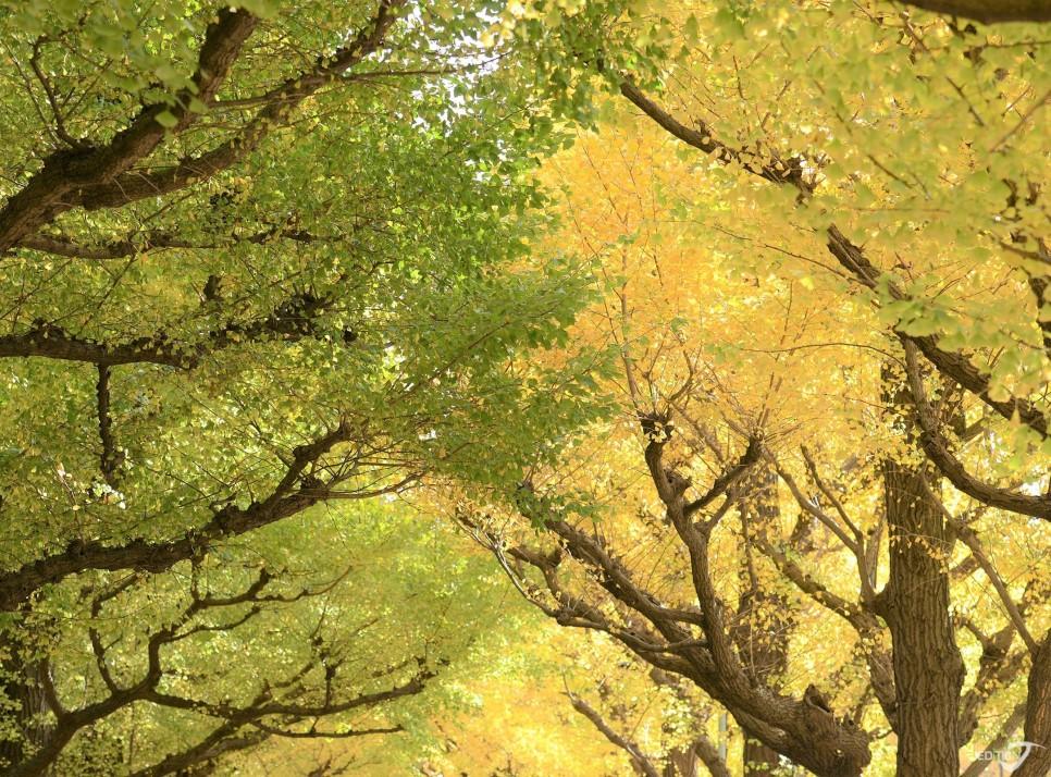 看点三   自然界的渐层色