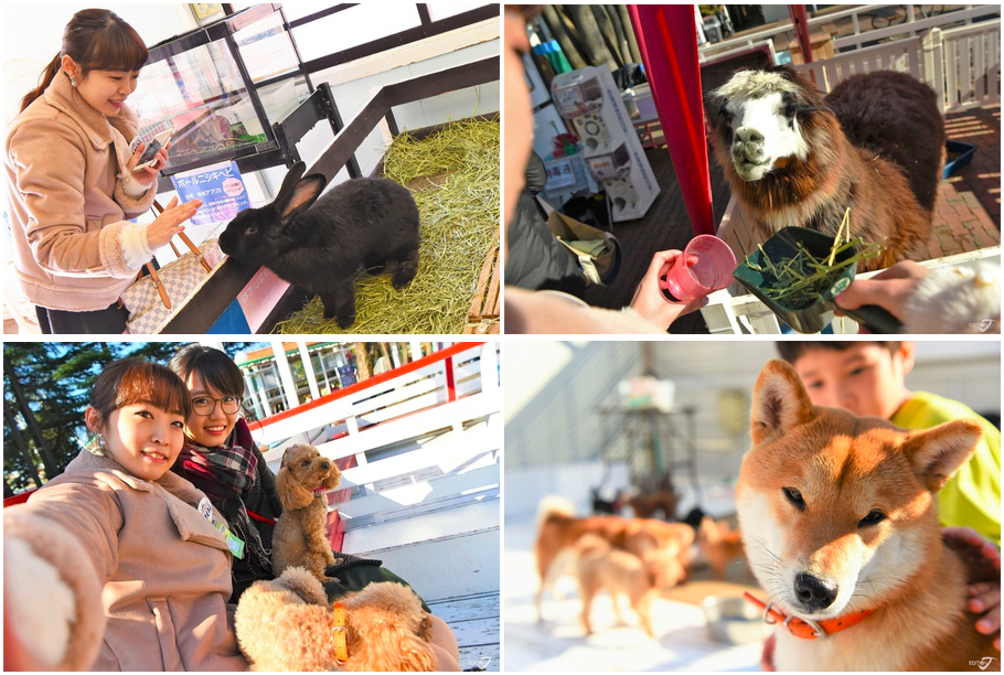 Toshimaen Petting Zoo