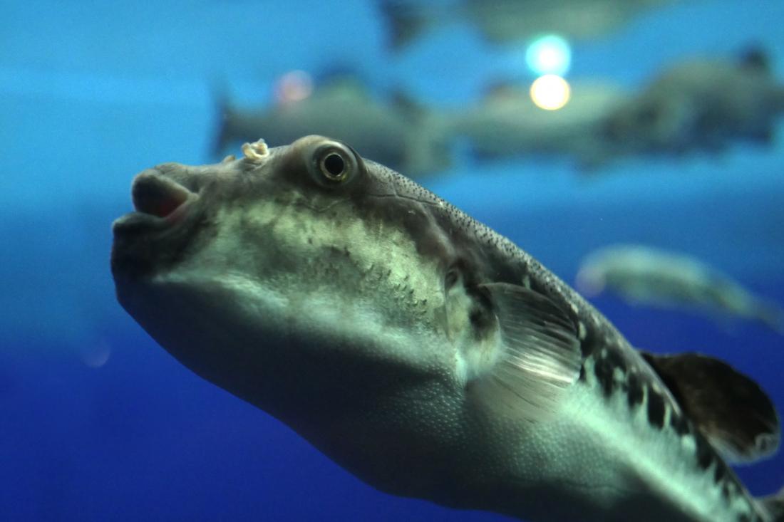 Un large aquarium