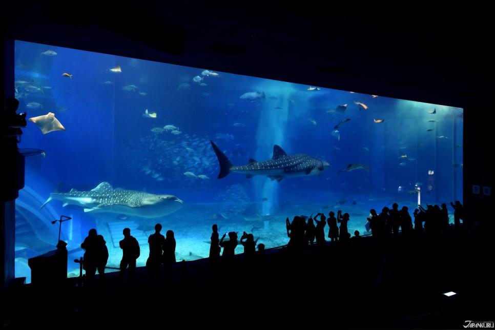 L'aquarium est situé à Motobu, au Nord de l'île d'Okinawa