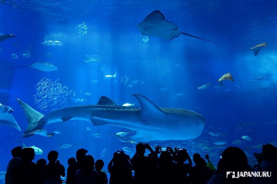 L'aquarium principal est juste gigantesque et accueille des espèces magnifiques