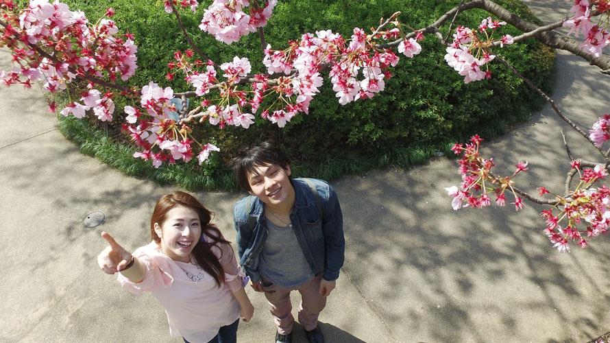 RECOMMANDATION | 4 Endroits pour Profiter des Sakuras à Tokyo