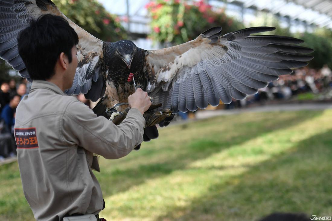 鸟类表演秀/バードパフォーマンスショー