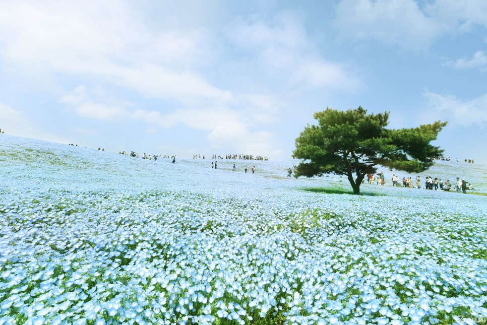 Ibaraki Prefecture → Hitachi Flower Park