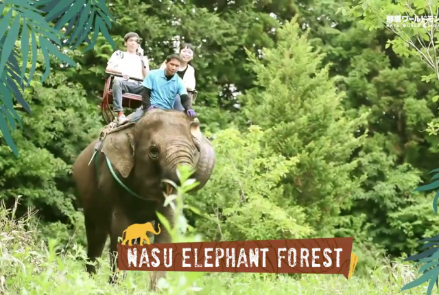 Nasu Elephant Forest (ゾウの森)