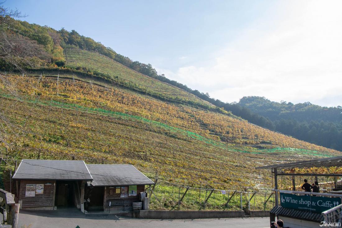 Cửa hàng và nhà hàng nhỏ của COCO Farms and Winery nằm ngay hướng có thể nhìn thấy những ngọn đồi màu mùa thu nơi có những vườn nho.