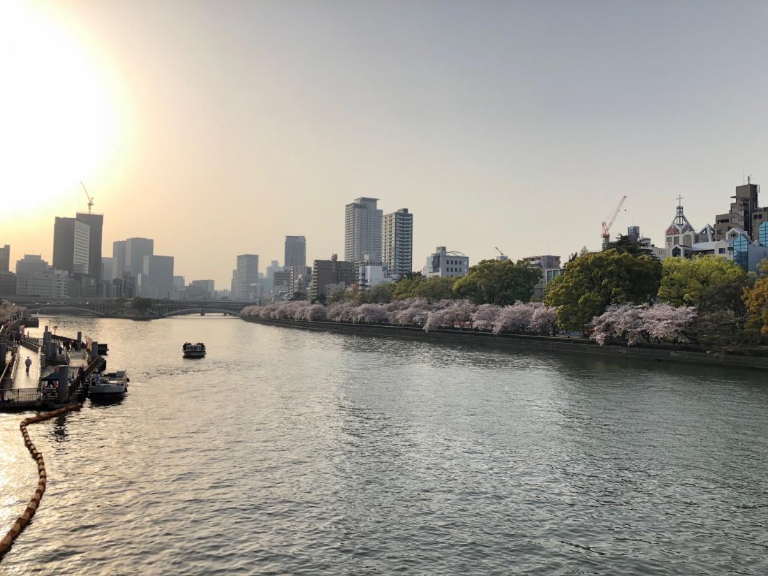 大川河堤邊綿延的櫻花