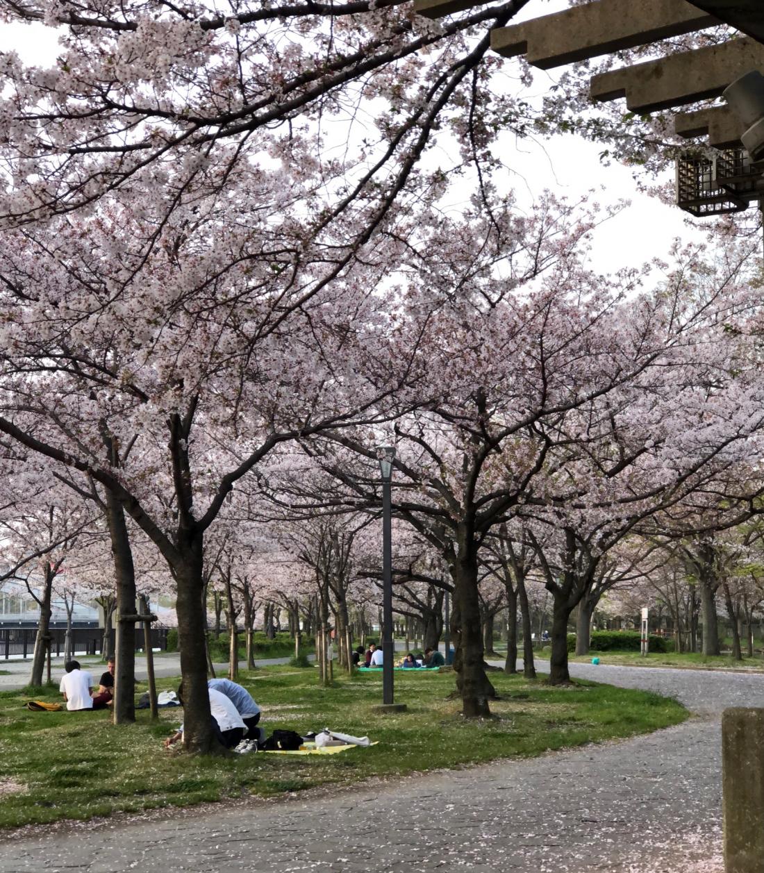 悠閒地野餐的日本人