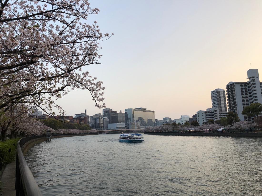 遠處駛來的櫻花遊覽船