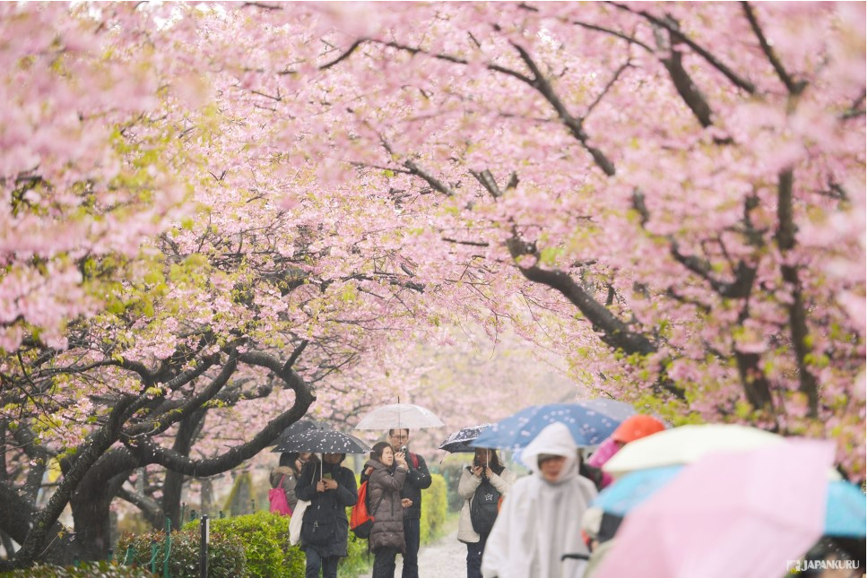 Ueno Park Sakura Festival