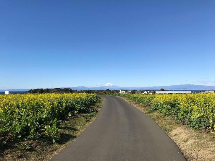 Con đường xinh giữa hai dàn hoa cải