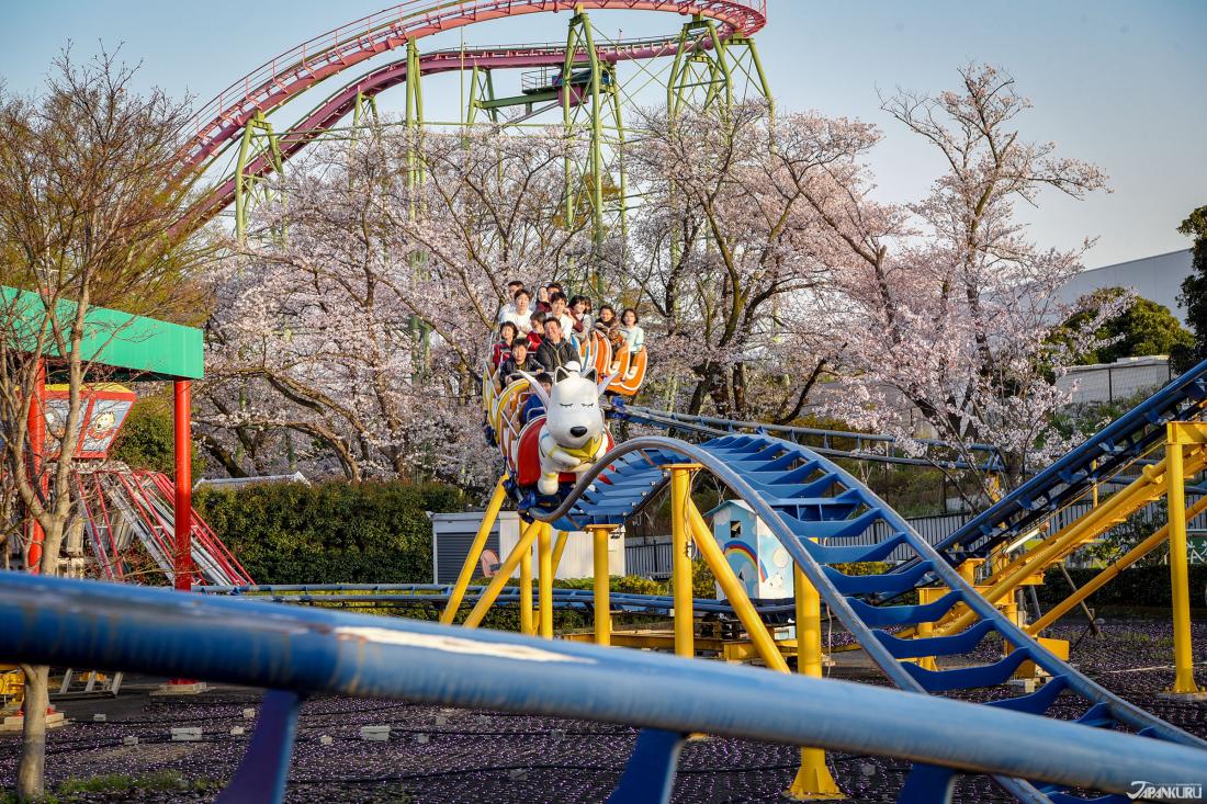 รถไฟสายซากุระเหมาะสำหรับเด็กและผู้ใหญ่