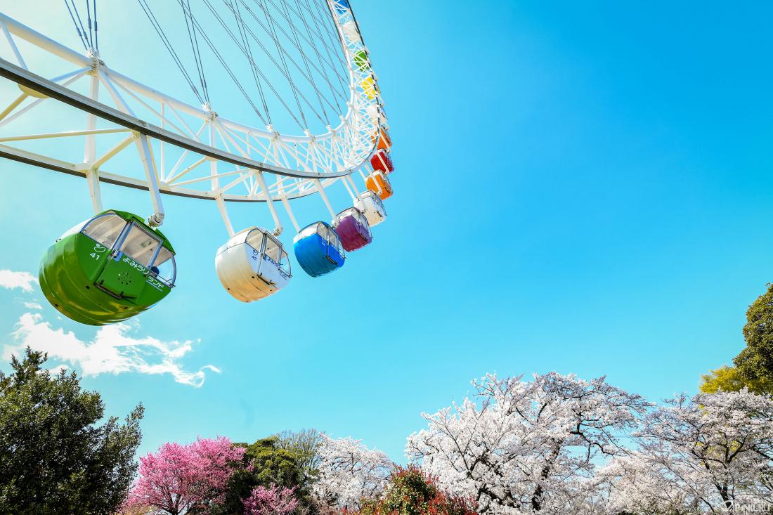 ชิงช้าสวรรค์ชมวิวที่กลายเป็นสีชมพูของสวนสนุก
