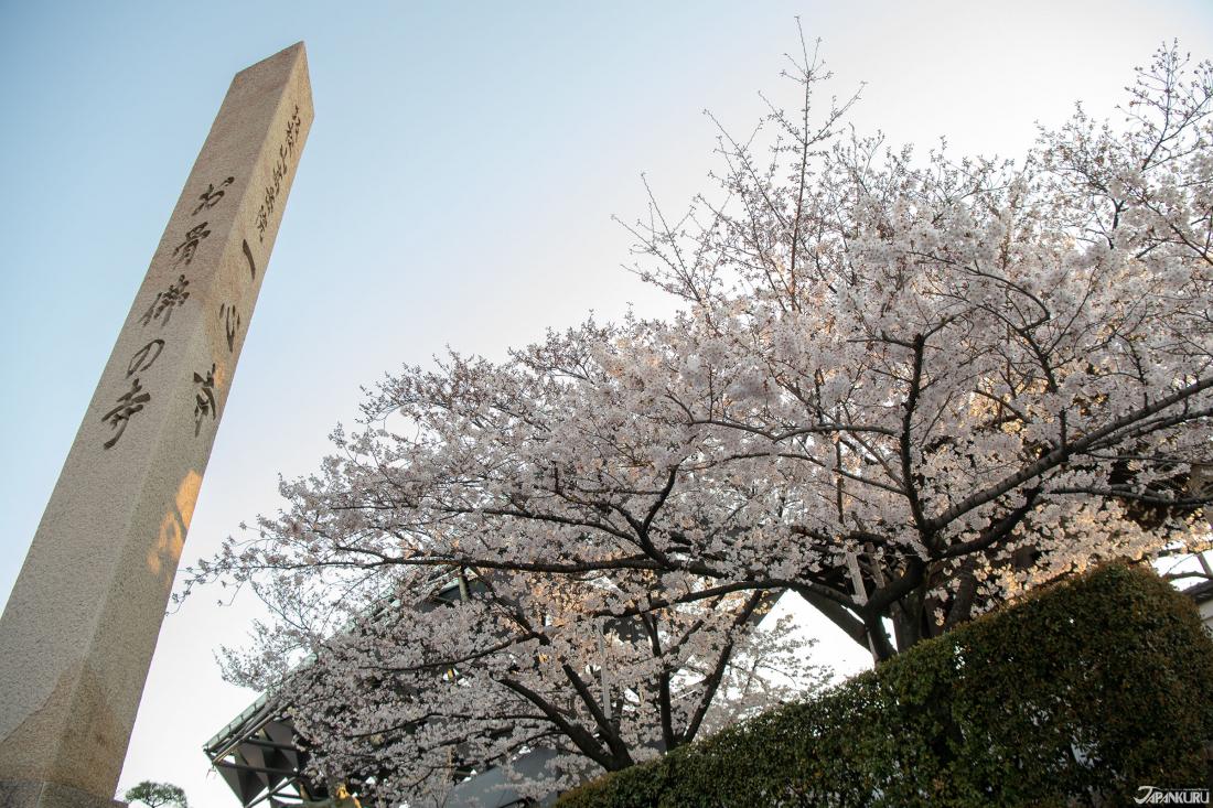 詩意櫻花小庭園「一心寺」