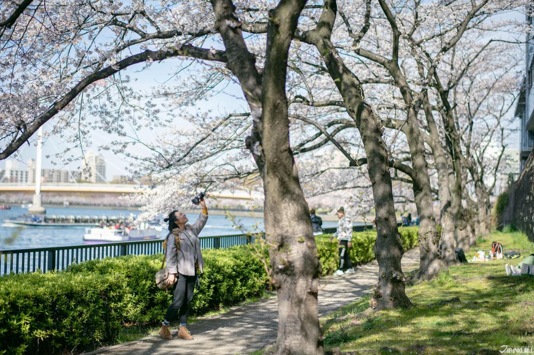 4800棵河岸櫻花步道「南天滿公園與大川」