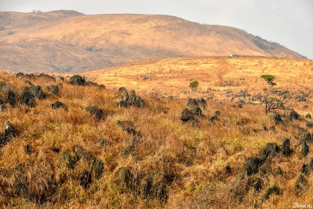 枯草參差的石灰岩,透露出超越三億年洗練的色澤。