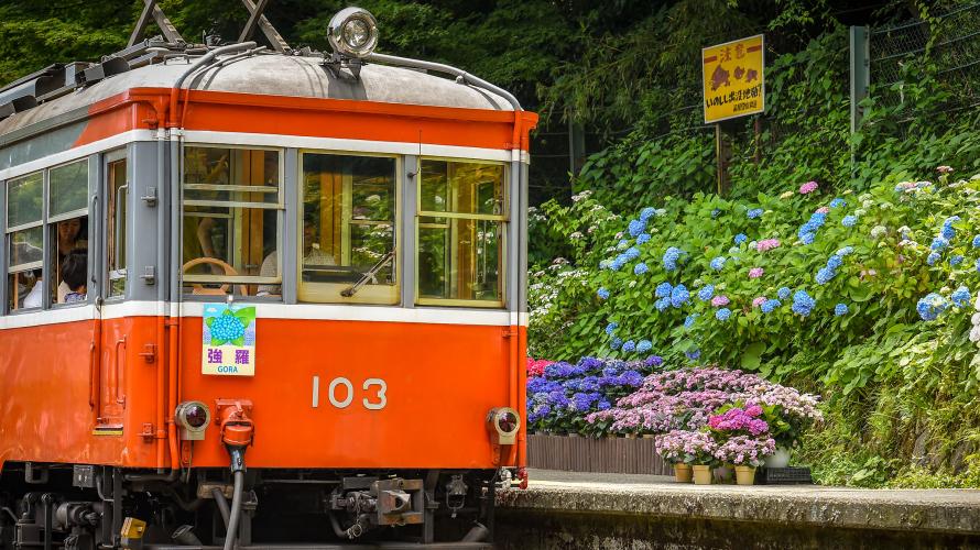 箱根の紫陽花見にいこう!登山鉄道でめぐる6月の箱根