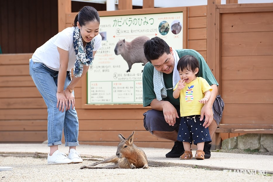 Commune with the Capybara at Nasu Animal Kingdom