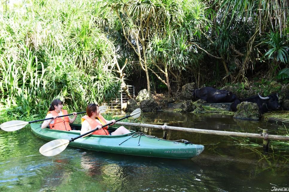연못를 가르는 통통배 '카누'