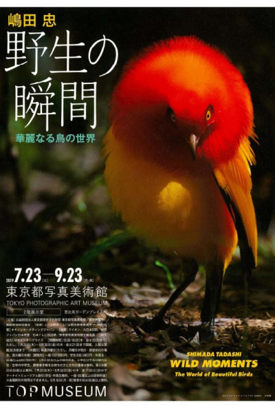 This exhibition of leading nature photographer Tadashi Shimada's work will focus on his most famous subjects: the birds of Japan. The brilliant feathers of Japan's kingfishers gleam in the beautiful natural portraits created by Shimada over his 40-year career, in photographs clearly influenced by Japan's traditional Nihon-ga style of painting. In addition, the exhibition will introduce new photographs taken during the artist's trip to