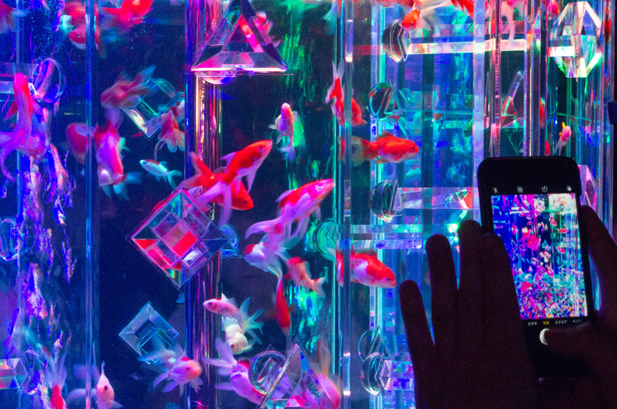 Tới thăm viện bảo tàng mĩ thuật tương lai Nihonbashi