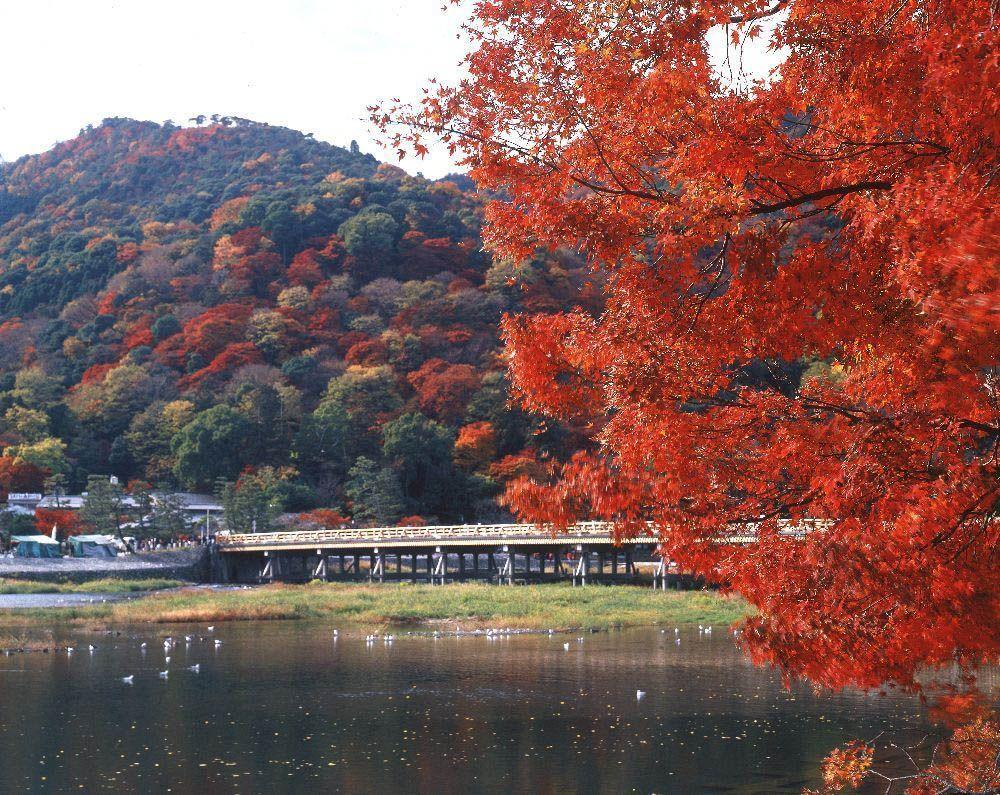 圖源:京都府観光連盟