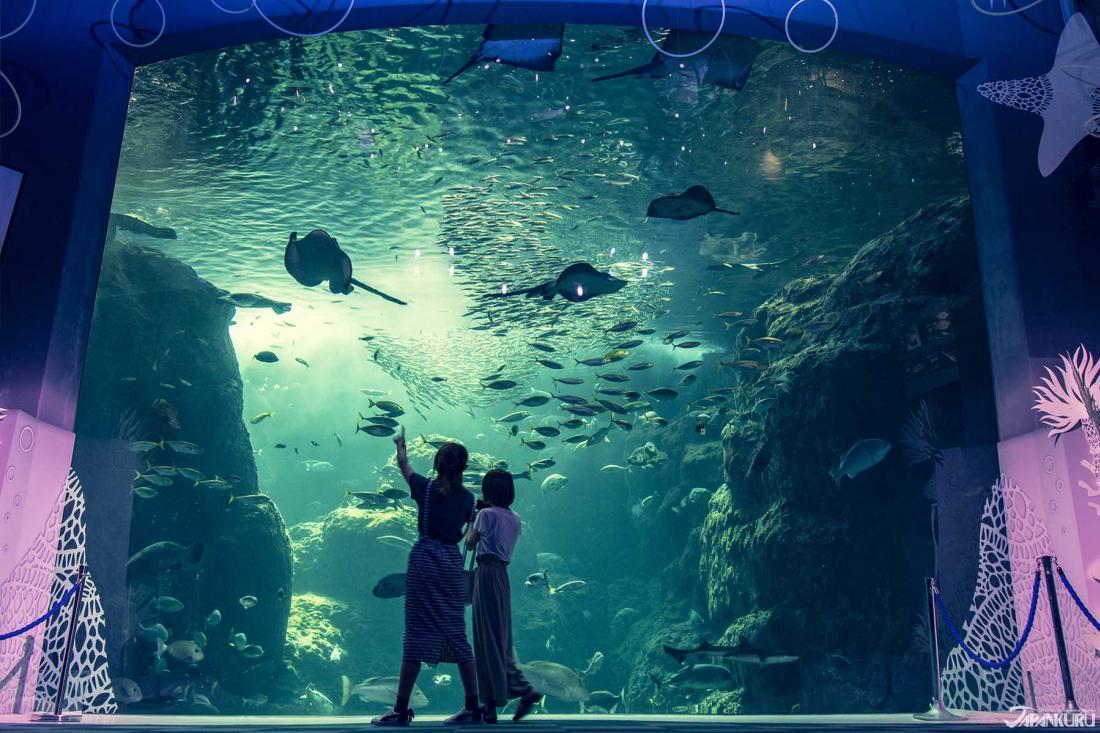 東京 水族館