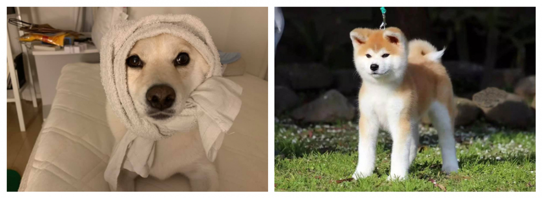 Me on the left and an Akita on the right again.