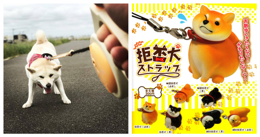 That's me in the pic on the left, and on the right is a cute Shiba Inu key strap.