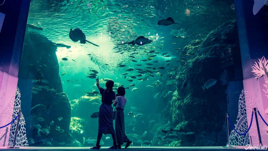 Thủy cung Enoshima Aquarium: Thế giới thần tiên của các loài sứa