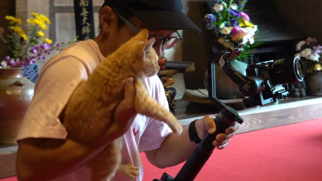 This Temple Cat Wants to Be a Star... or Maybe Just Wants Some Pets