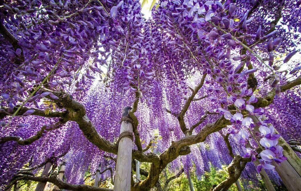 Hình ảnh: boutiquejapan.com