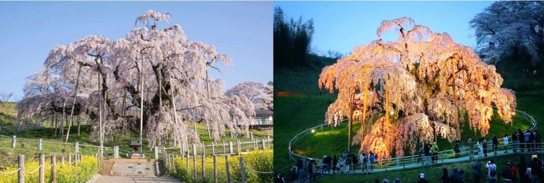 Hình ảnh: wondertrip.jp