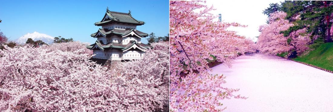 Hình ảnh: Hirosaki City, JNTO