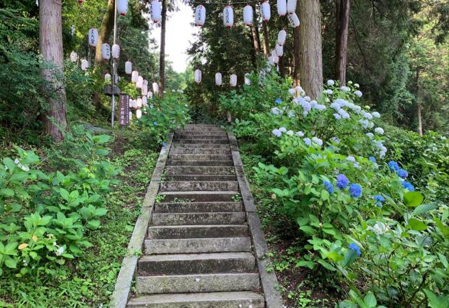 ✕ Mashiko Hydrangea Festival (Kashima Shrine/Taihei Shrine, Tochigi) (Canceled Due to COVID-19)