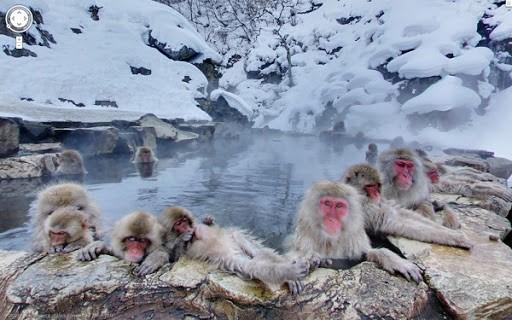Nếu tuyết rơi dày và lạnh hơn, những chú khỉ sẽ xuống ngâm mình ở onsen nư vậy luôn. Hình ảnh: tinnuocnhat.