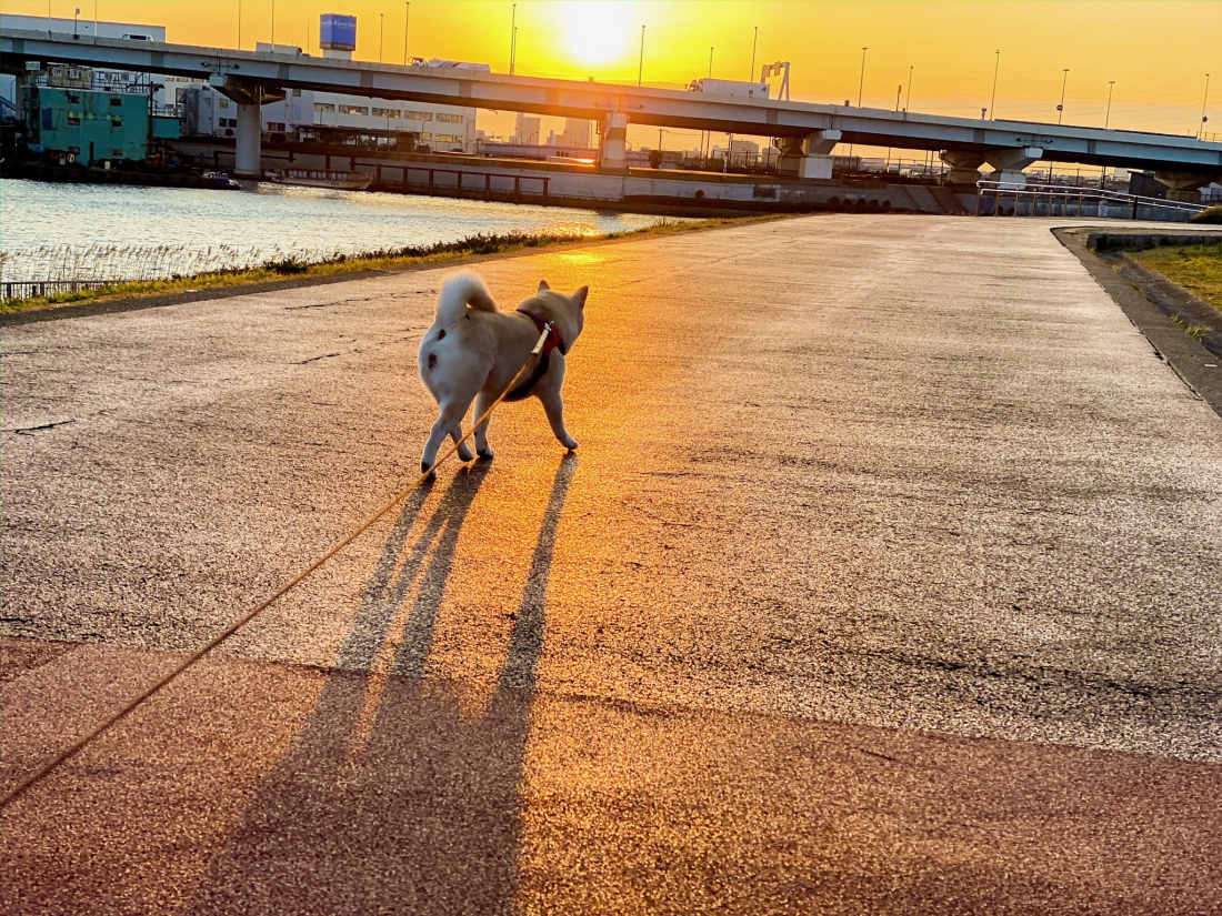 아침 6시면 산책시작!