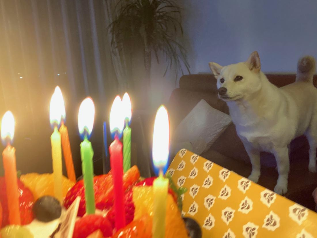 생일촛불도 해주고.