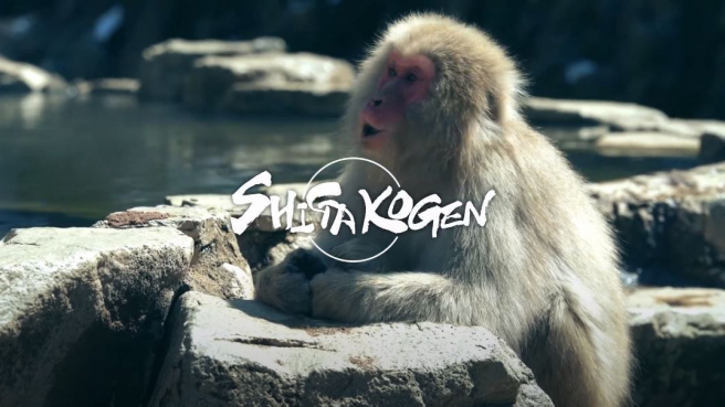 Japan's Best Ski Slopes - plus Hot Spring Monkeys! - Shiga Kogen