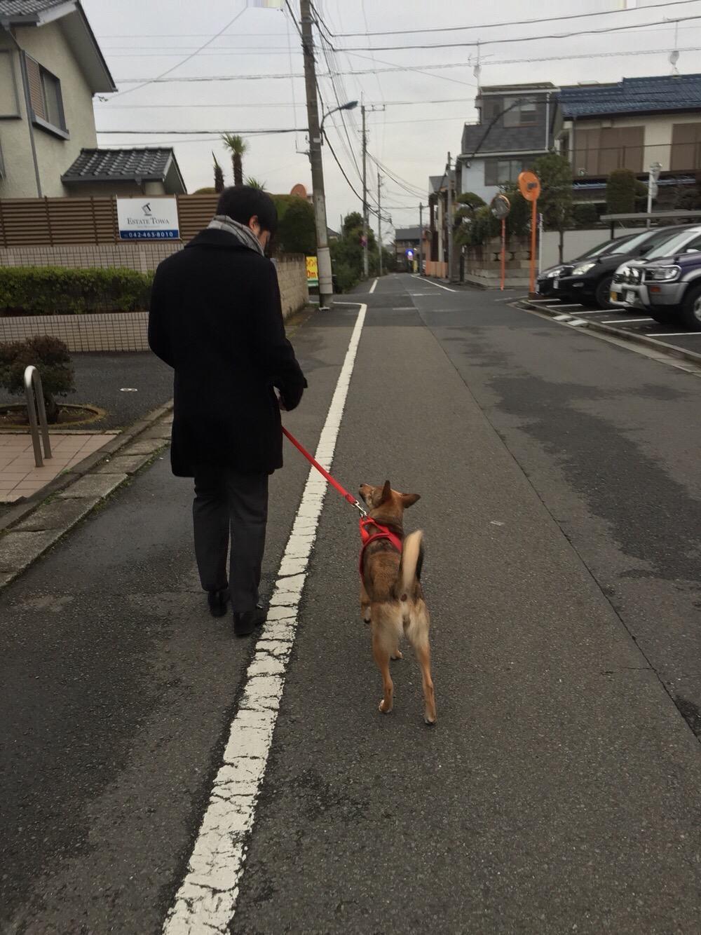 一緒に散歩できるようになるまですごい時間はかかりました。